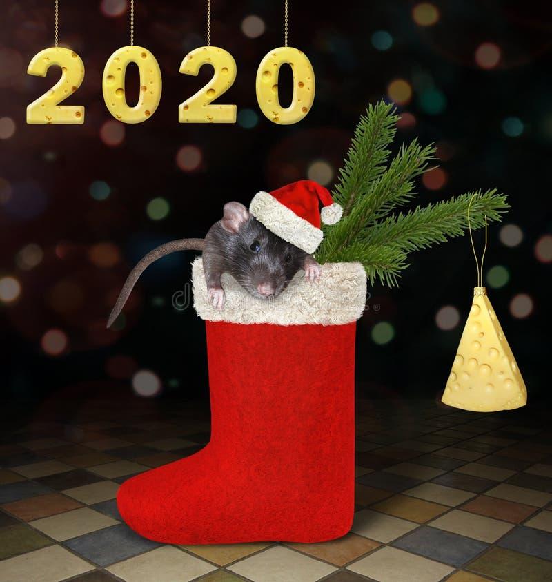Rat dans la botte de Noël 2 image libre de droits
