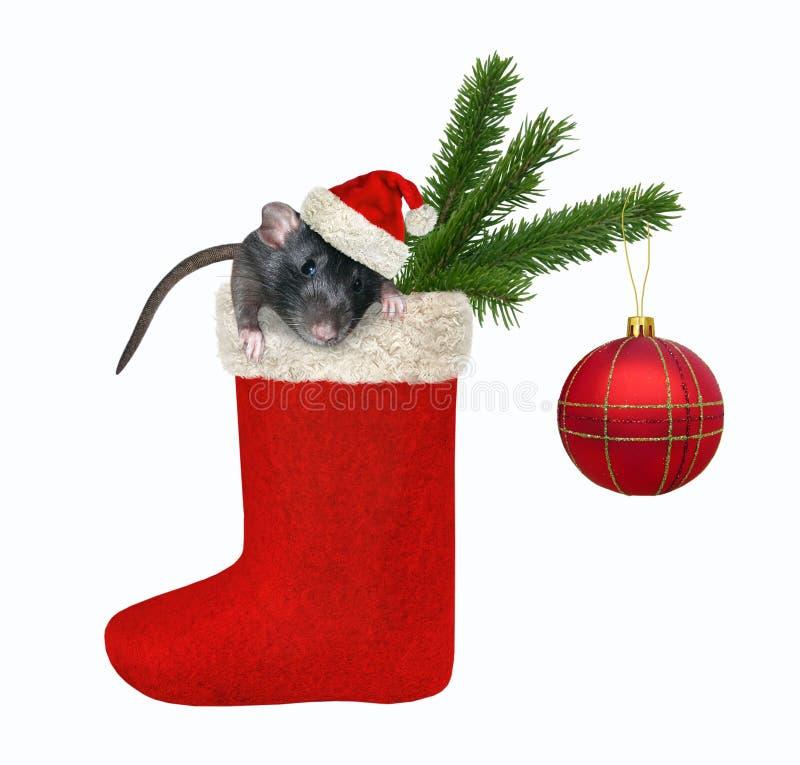Rat dans la réserve de Noël 2 images stock