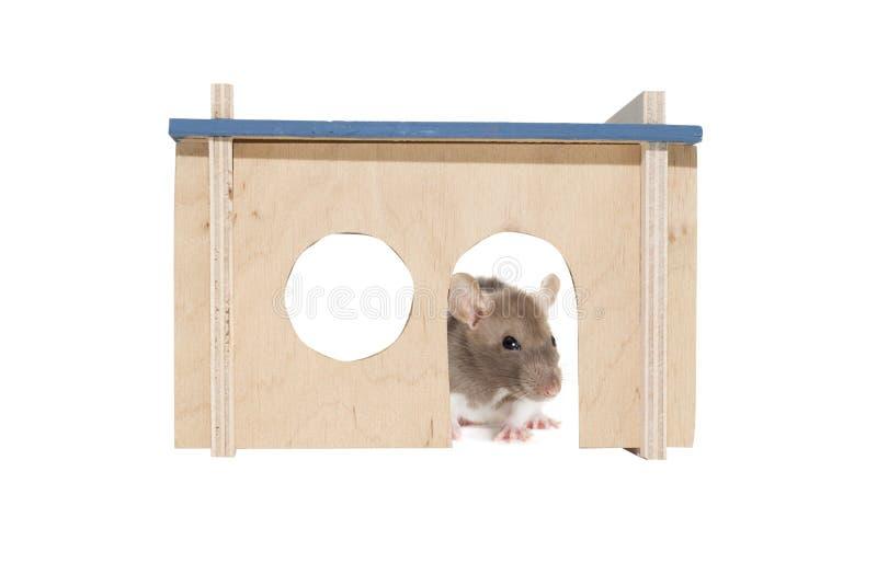 Rat dans une maison en bois photos stock