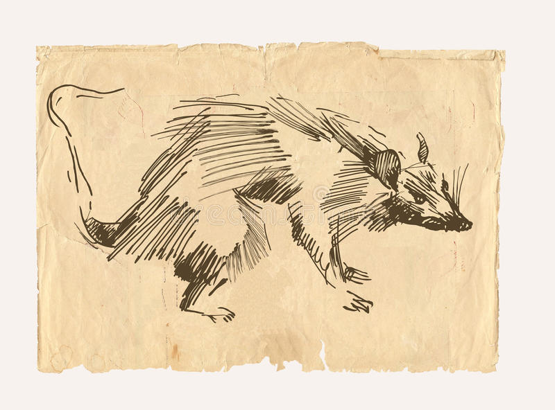 Download Rat drawing on old paper stock illustration. Image of pencil - 27696684