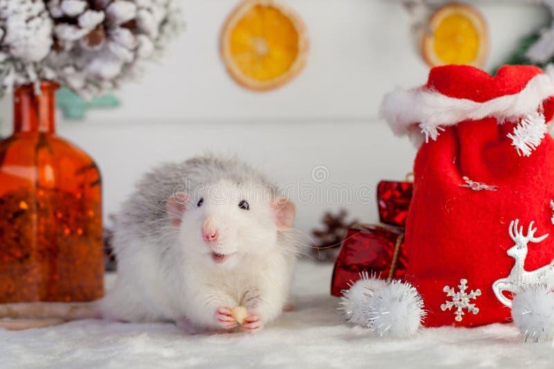 Rat mignon décoratif sur un fond des décorations de Noël images stock