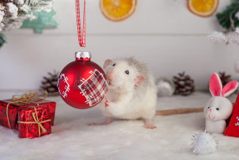 Rat mignon décoratif sur un fond des décorations de Noël photographie stock