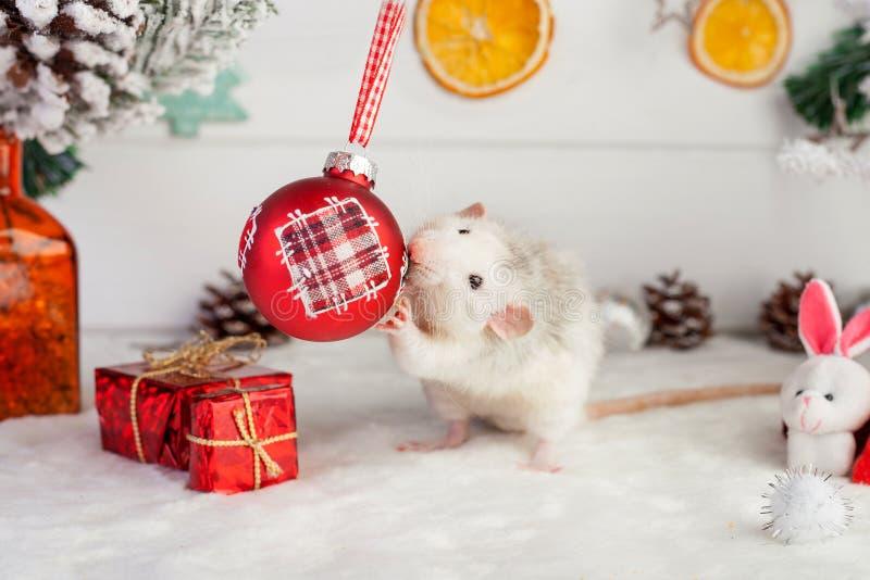 Rat mignon décoratif sur un fond des décorations de Noël photos libres de droits