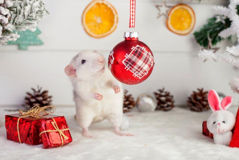 Rat mignon décoratif sur un fond des décorations de Noël photographie stock libre de droits