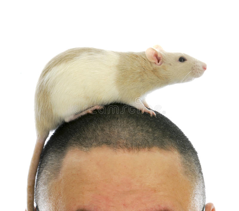 Download Rat On Person's Head Royalty Free Stock Images - Image: 24457559