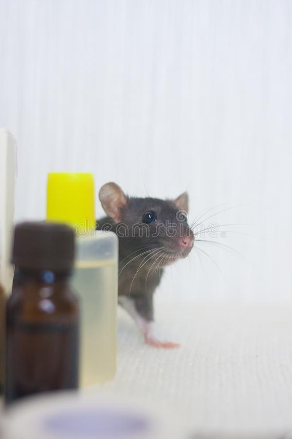 Rat Poison Stock Images - Download 1,060 Royalty Free Photos