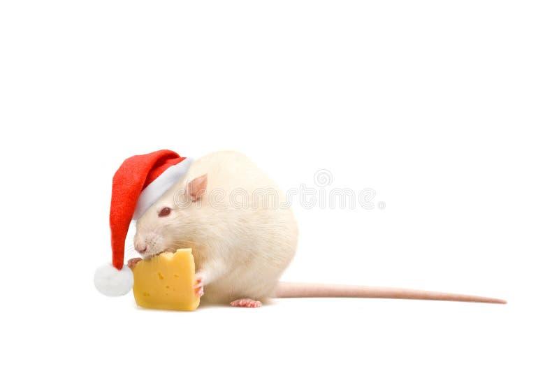 Rat in santa-hoed en kaas op witte achtergrond stock fotografie