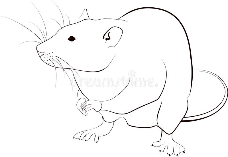 Line Drawing Rat : Rat sketch stock vector illustration of rodent clipart