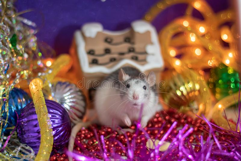The rat is a symbol Of the new year 2020. Happy New year 2020. Chinese calendar. year of rat stock photo