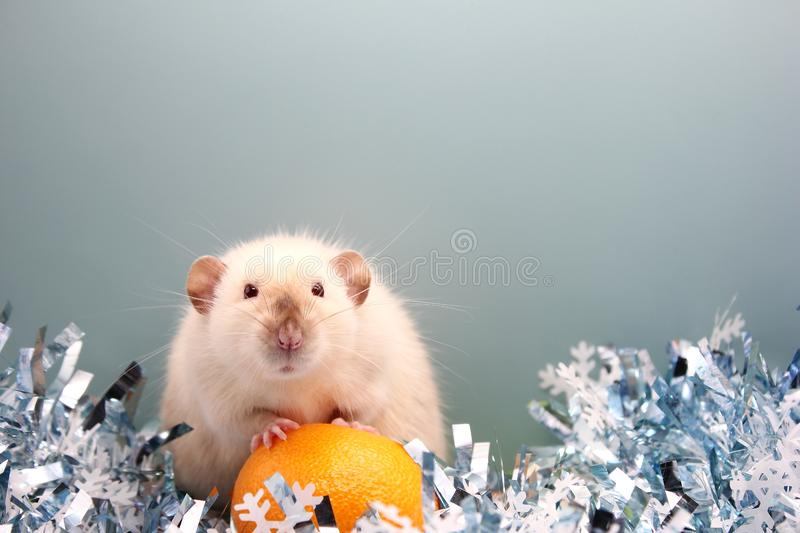 The rat is a symbol Of the new year 2020. Happy New Year royalty free stock photo