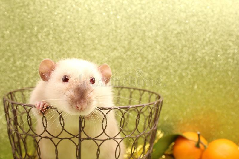 Rat-symbol of the new year 2020 in a metal openwork basket stock images