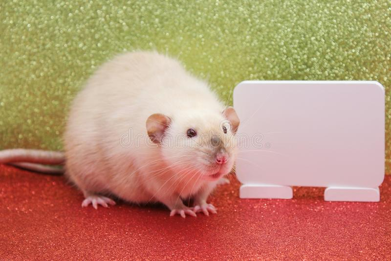 The rat is a symbol Of the new year 2020. White plate for writing text stock images