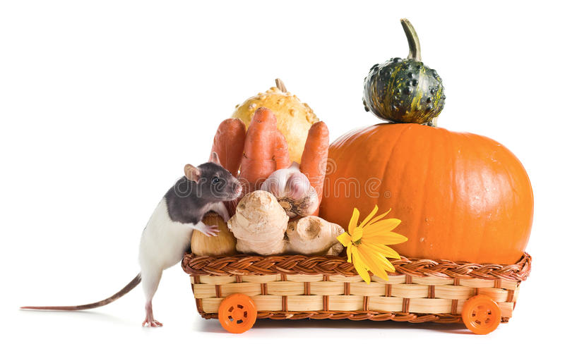 Rat And Vegetables Royalty Free Stock Image