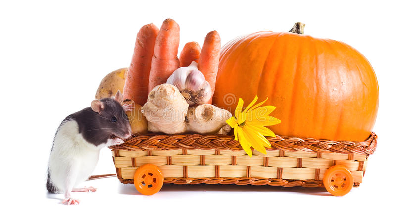 Rat And Vegetables Royalty Free Stock Photography