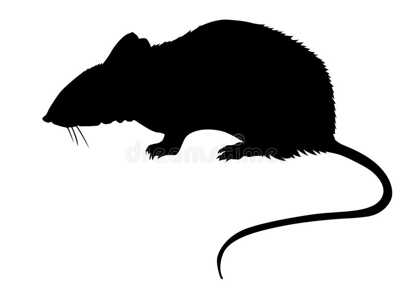 Rat on white background. Silhouette of the rat on white background