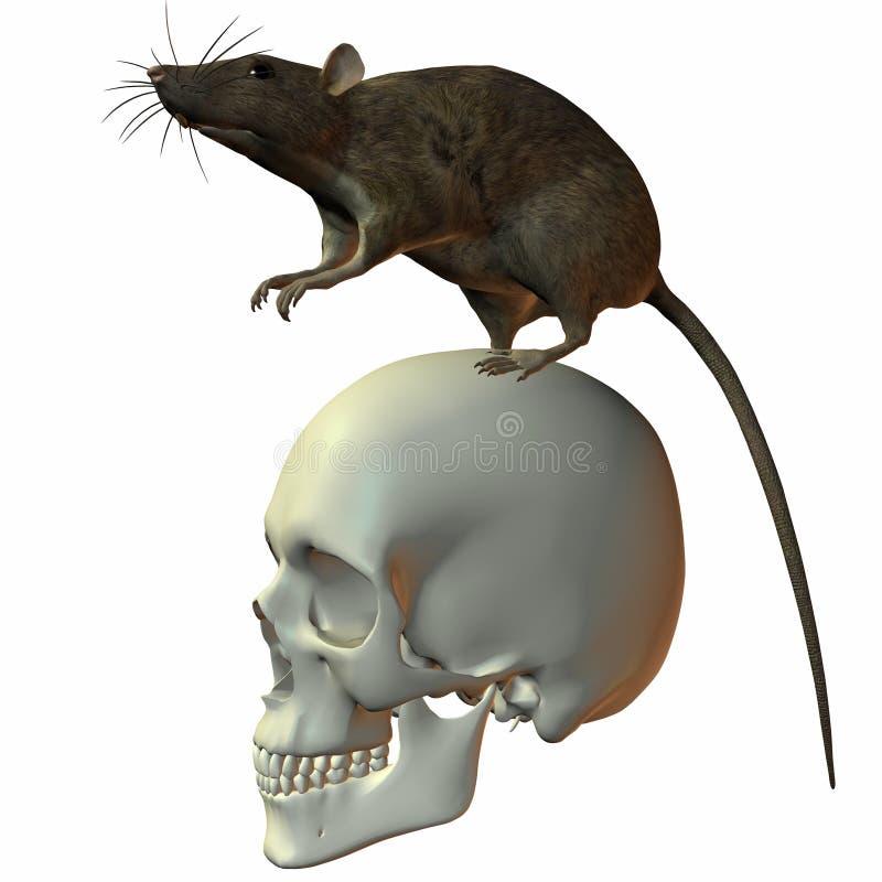 Rata en el cráneo ilustración del vector