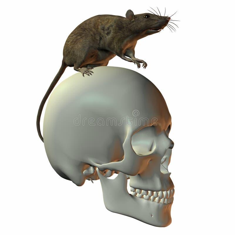 Rata en el cráneo libre illustration