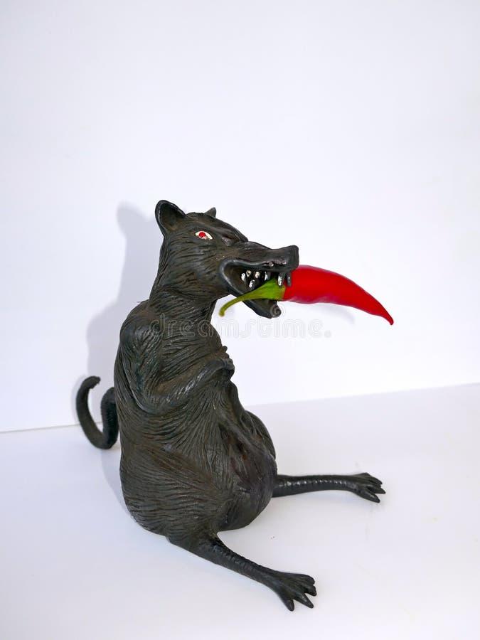 Rata negra con el chile rojo, aislado en el fondo blanco imagen de archivo libre de regalías