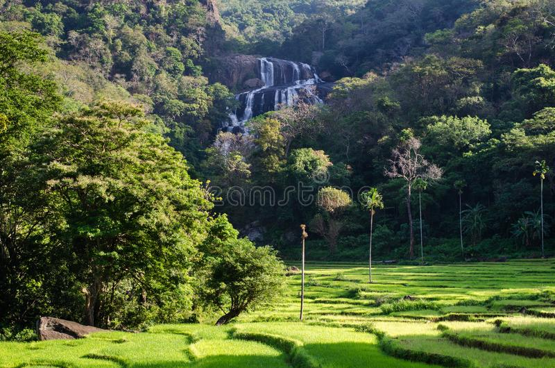 Rathna Ella, at 111 feet, is the 10th highest waterfall in Sri Lanka, situated in Kandy District. The main occupation of the villagers in Rathna Ella is paddy stock photos