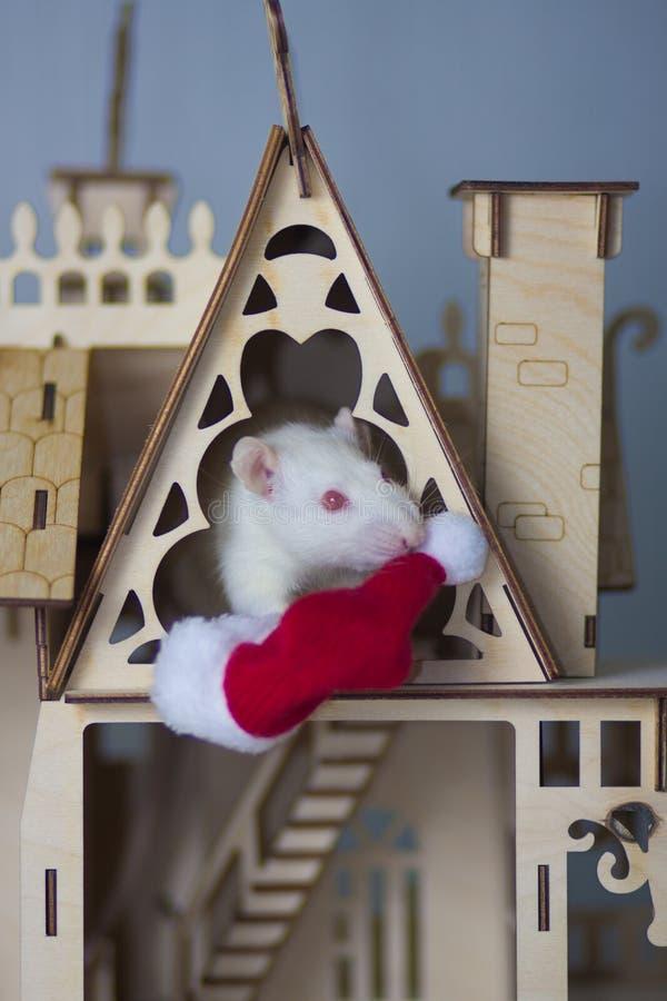 Rato branco com casa de madeira O rato ? um s?mbolo do ano novo chin?s fotos de stock royalty free