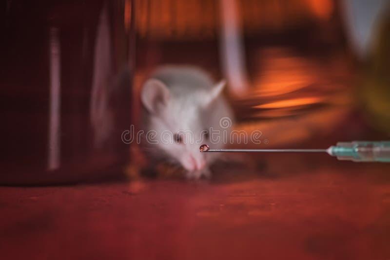 Rato branco do laboratório no fundo das garrafas com reagentes Contra os testes animais imagem de stock