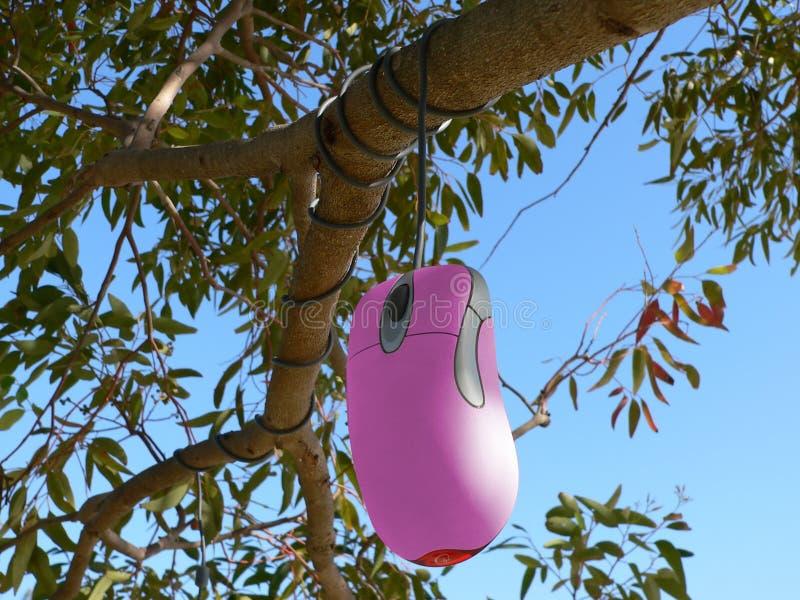 Rato cor-de-rosa que pendura da árvore imagens de stock royalty free