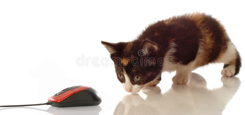 Rato de desengaço do computador do gatinho