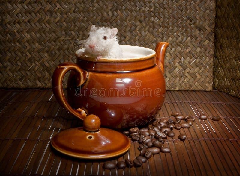 Rato do café imagens de stock