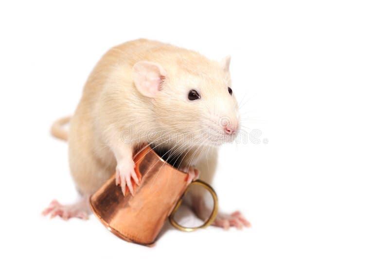 Rato do gengibre com caneca de cobre imagens de stock