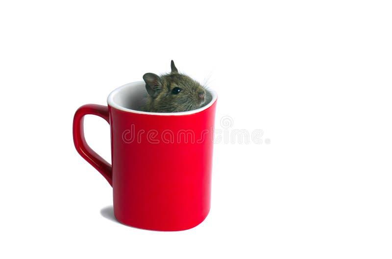 Rato em uma caneca imagem de stock