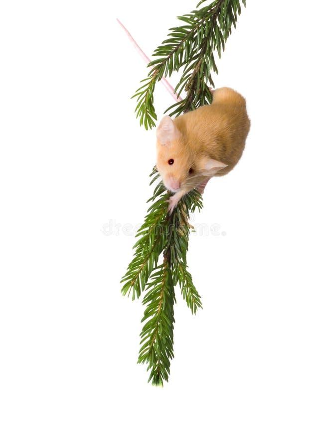 rato em uma pele-árvore foto de stock royalty free