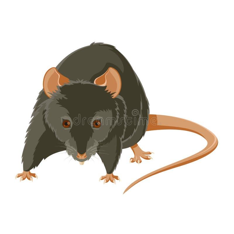 Rato mau ilustração royalty free