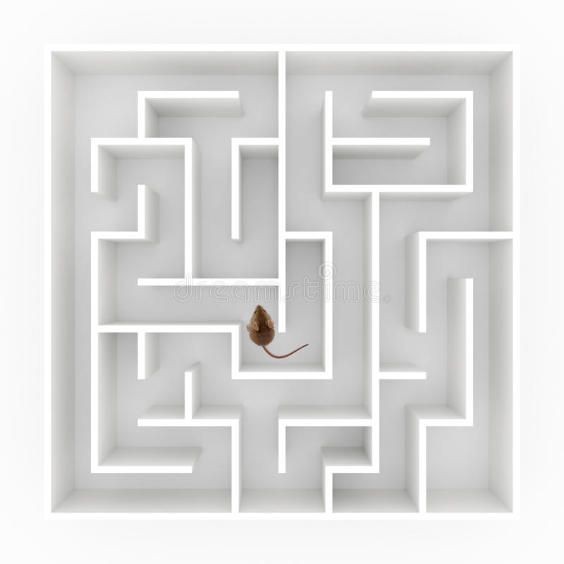 Rato no labirinto foto de stock royalty free