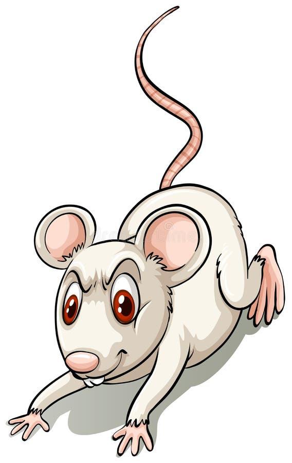 Rato pequeno irritado ilustração royalty free
