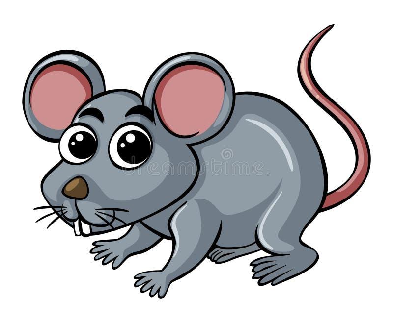 Rato pequeno no fundo branco ilustração royalty free