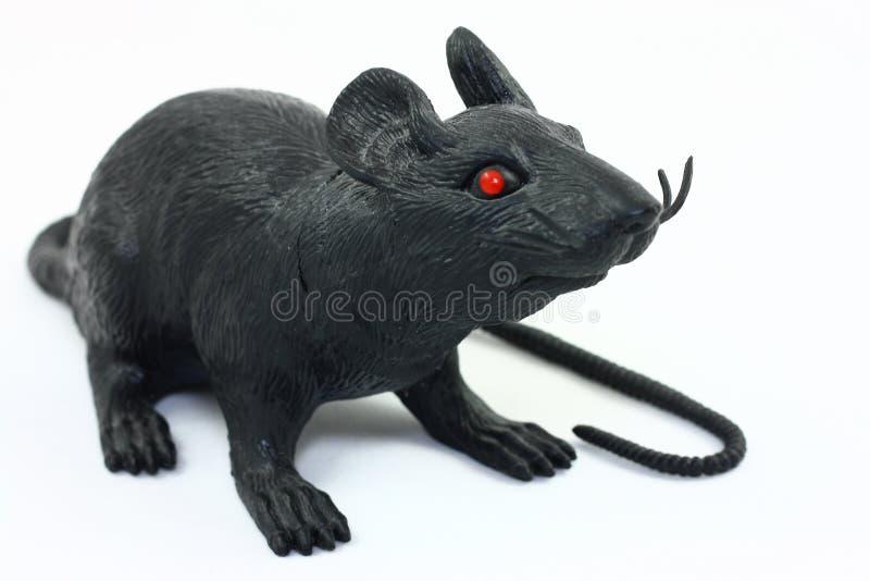 Rato preto no branco imagens de stock