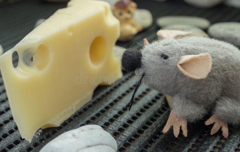Rato que olha o queijo fotos de stock royalty free