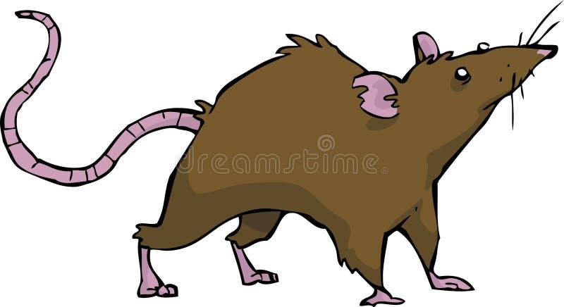 Rato selvagem ilustração stock
