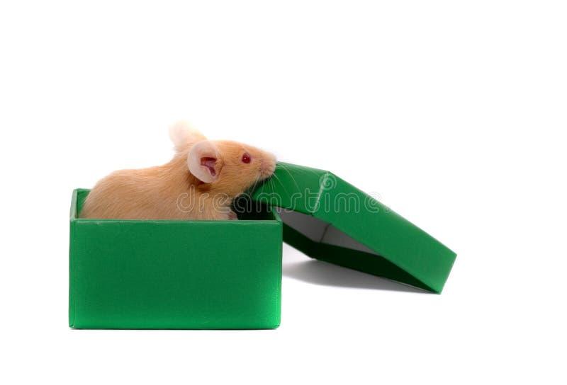 Rato uma caixa. fotos de stock