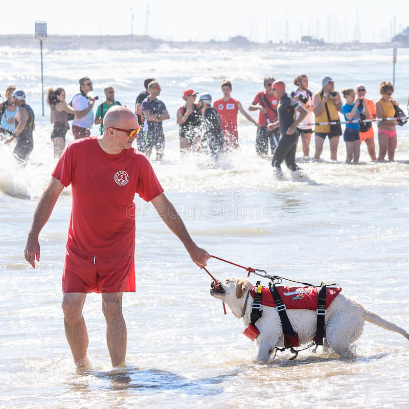 Ratownika i ratuneku pies przy Ironman 70 3 w Pescara zdjęcie stock