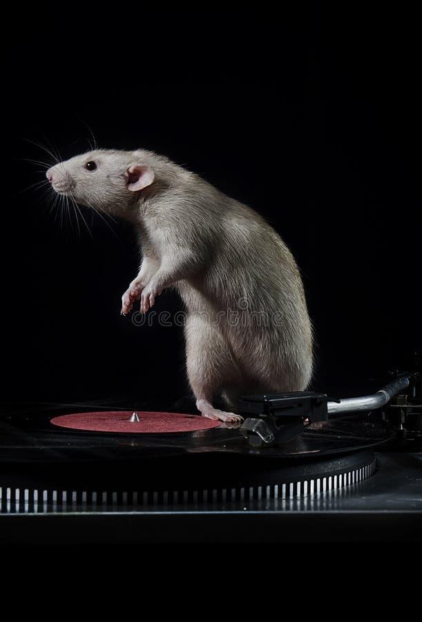 Ratten und Vinylspieler lizenzfreie stockfotos