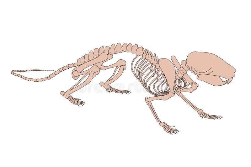 Rattenskelet royalty-vrije illustratie