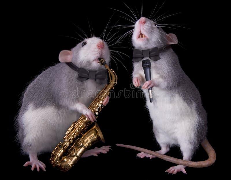 Ratti musicali immagine stock