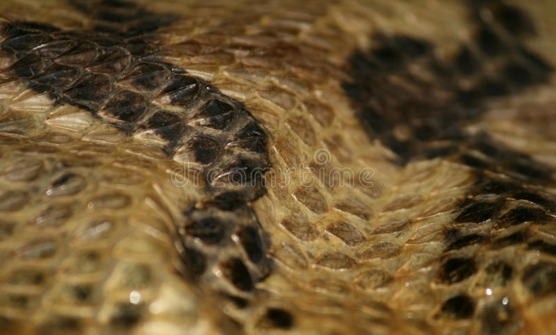 Rattlesnake Hide stock photo