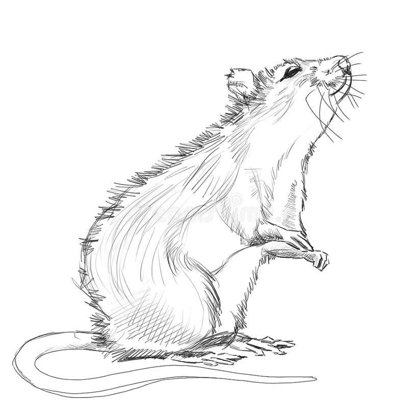Ratto illustrazione di stock