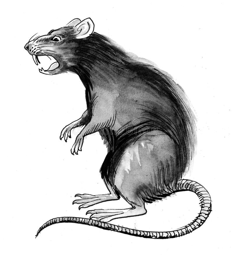 Ratto grigio illustrazione di stock
