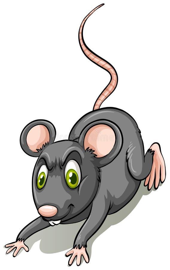 Ratto nero illustrazione vettoriale