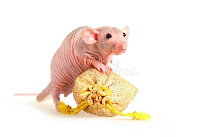 Ratto nudo fotografia stock libera da diritti