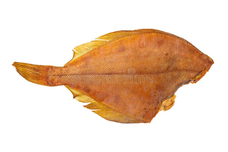 Raubkopflatfisch stockfotos