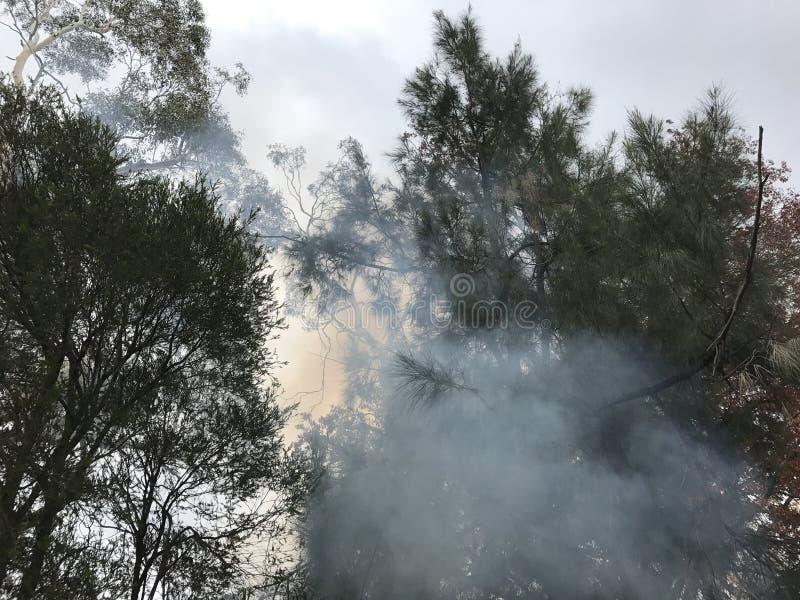 Rauch und Bäume lizenzfreie stockfotografie